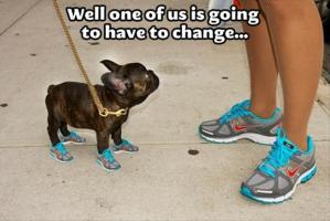 dog-in-running-shoes